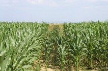 Poljoprivredna proizvodnja, proizvodnja sjemena, žitarice, okopavine, uljarice