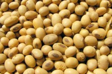 Proizvodnja sjemena